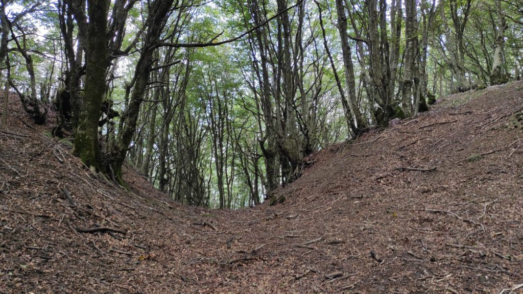 L'abbraccio del bosco