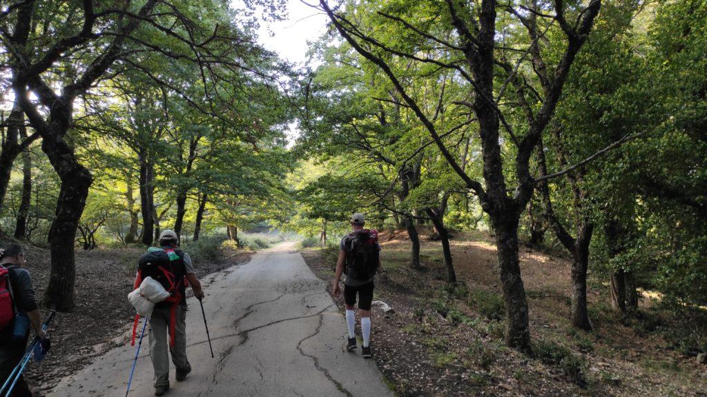 Il boschetto vicino il lago Quattrocchi